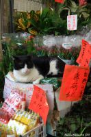 Cat for Sale by Alcamin