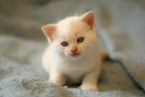 Little kitten by Redcoat1776