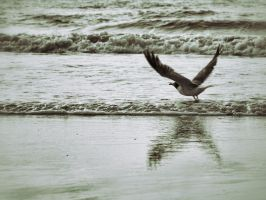 Wings of Gull by ScottJWyatt