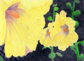 Colored Pencil Flowers by brandychristine1987