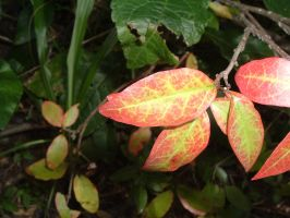 Genx-Xantos' weird color leaf by dproberts