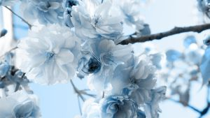 dreamy blue-widescreen by illusionality
