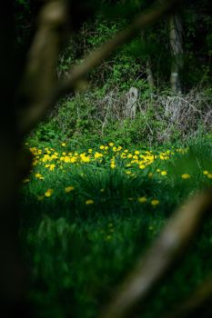 Yellow in woods by murknl