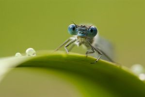 Blue beastie by AngiWallace