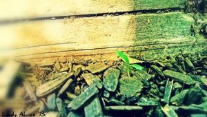 A Single Sprout by AliceLovesChes