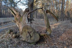 Bizarre Tree Trunk by feainne-stock