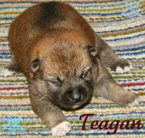 Teagan baby picture by MonsoonWolf