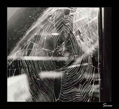 Spider by pleasehold