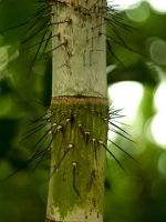 Spiky Bamboo 01 - Mar 12 by mszafran