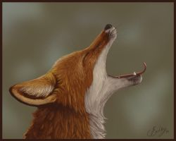 Sleepy Fox by JenniferEasley