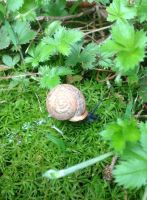 Snail With A Trail by PeacockandPeridot