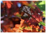 S.Rock - Colors of Fall 013 by ShineOverShadow