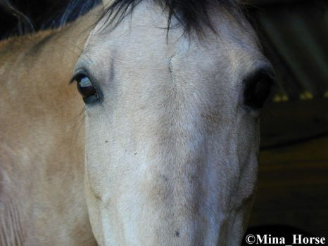 Eyes of horse 2 by MinaHorse