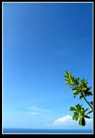 creciendo by jaguar404