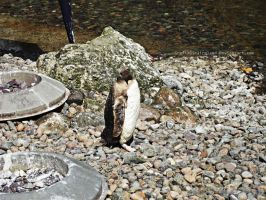 Belfast Zoo-Penguin by GrafixGirlIreland