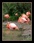 Flamingo Party by W-L-Designs