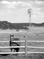 'Horse and Windmill' by ilovelucy365