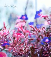 mysterious by Angelosjay