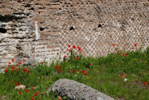Poppies and Ruins by adischordantrhyme