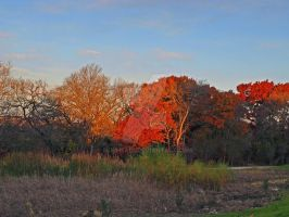 Sunset and Autumn Colors by mudhead1
