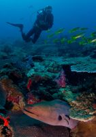 Moray Eel and Diver by leighd