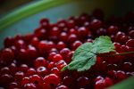 Red Currants by Dan52T