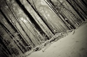 Winter trees by lalylaura