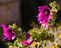 Purple Pesents by NickyG-Photography