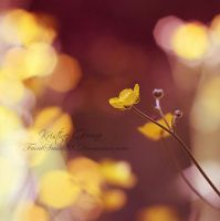 The Magic of Yellow by faintsmile28