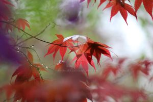 Color of Leaves by aRemlife