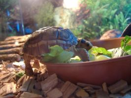 Baby turtle by Puckmonkey