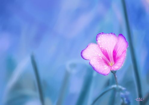 Realism Painting: Pink Flower by CarmenScholte