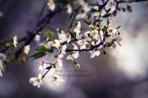_Spring. by Bloddroppe-nature