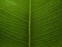 Green Veins 19476133 by StockProject1