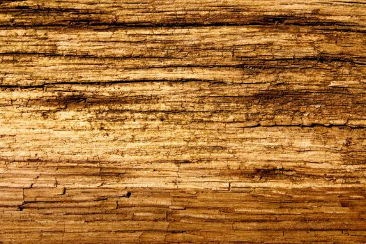 Free Wood Texture, 4 Images by designerfied