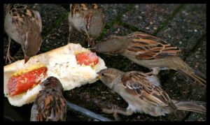 Gutter Lunchtime by Ewig