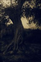 wishing tree 2 by Calisto-Photography