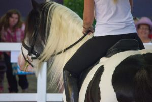 STOCK - 2014 Total Equine Expo-49 by fillyrox