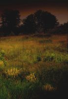 meadow by NicolasM
