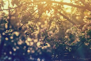Spring sunlight by kate-photo