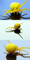 Yellow Spider by ninazdesign