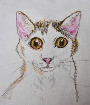 Calico Cat by Erinwolf1997