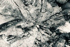 wood texture 01 by Stephasaurus-Stock