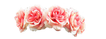 Pink Flower Crown PNG by halo-2fab4u-styles