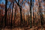 This Scorched Land II by FuriousEnnui