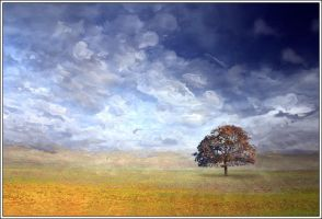 The Solitary Tree by Direct2Brain