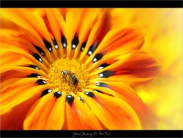 Yellows Blooming At Her Feet by ratulupadhyay
