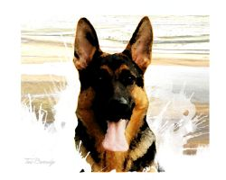 German Shepherd by ToriB