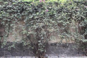 Wall and plants by BerryBlu