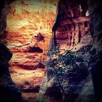 Petra tree II by lostknightkg